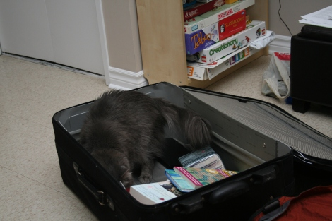 She's making sure that we have everything we need for our trip.  (And exploring new scents.)
