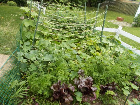 My Disorganized Garden